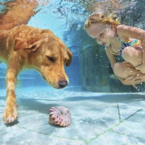 Autism Service Dogs